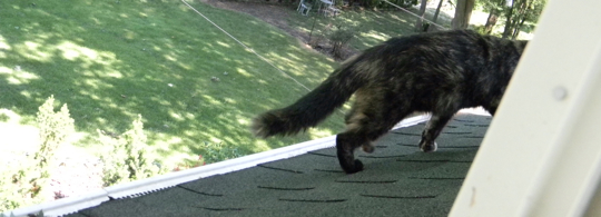 Cat on a warm, green asphalt roof