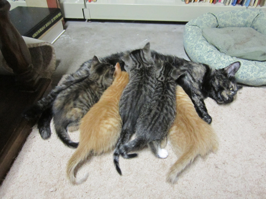 That's a lot of cat mass.