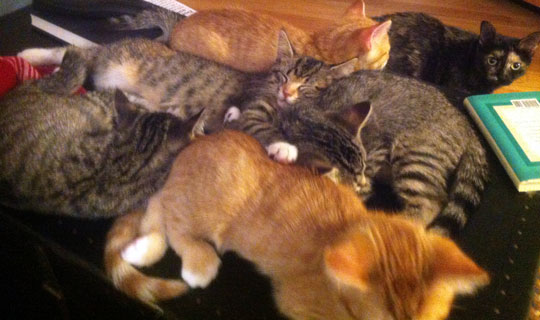 Contrary to popular belief, you can have too many kittens.